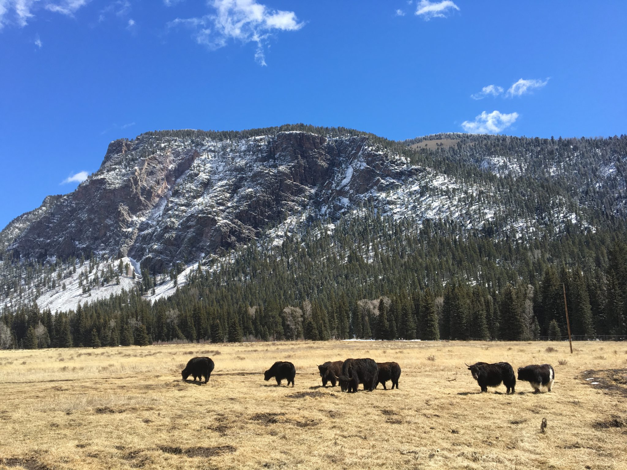 Yaks in meadow with mountains